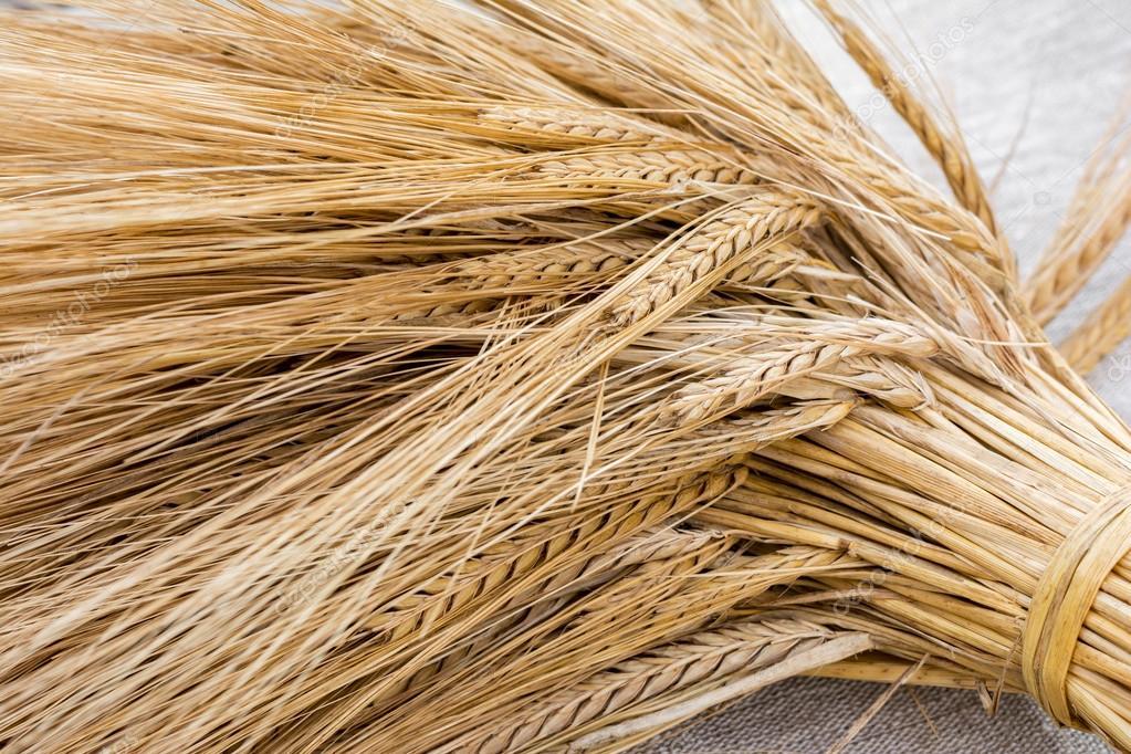 Hogyan döntjük el a termény árát? – Misna magyarul, Bává Meciá 5.