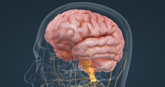 Hogyan fejlődött ki az emberi agy? – izraeli tudósok elmélete