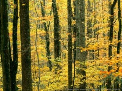 őszi-táj-képek-megsárgult levelek.jpg