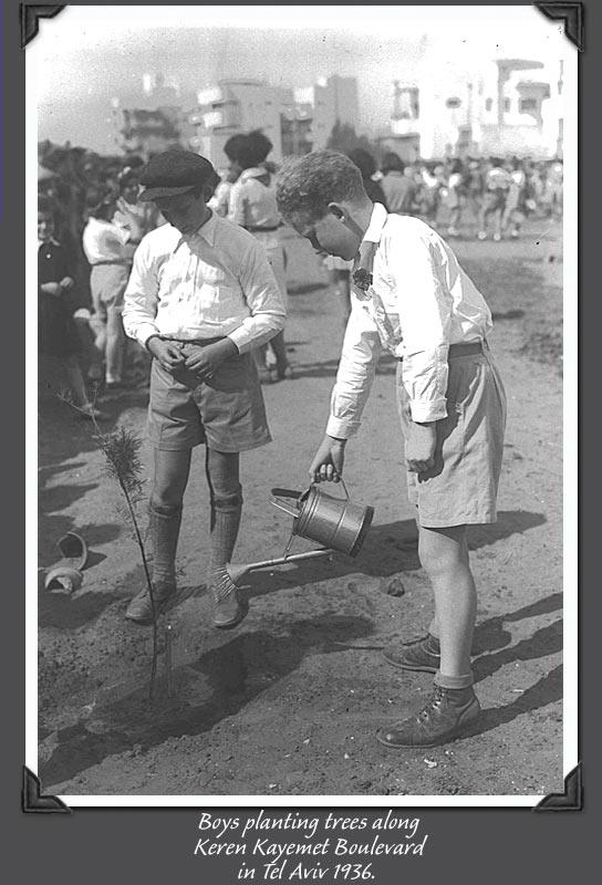 Faültetés - 1936, Tel Aviv.jpg