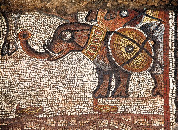 Harci elefánt